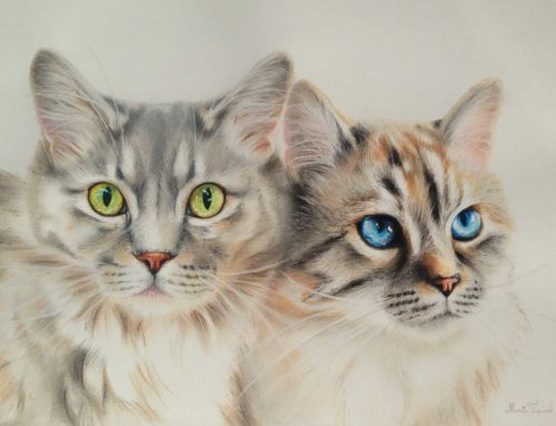 Katten van Joke